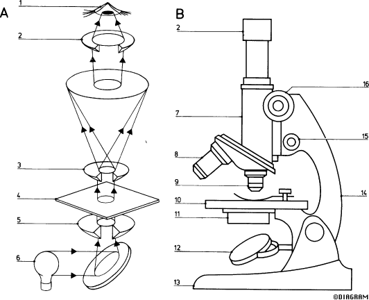 Biology 1 CM3Microscope intro – Parts of the Microscope Worksheet